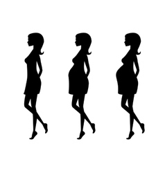 Silhouette of pregnant woman in three trimesters vector