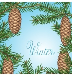 Background with fir branches and cones Detailed vector image