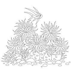 Coral fish and anemones vector