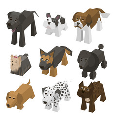 different breed isometric dogs vector image