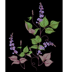 Legumes on black vector