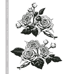 Hand sketched set of white roses in vintage style vector