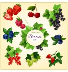 Berry and fruit cartoon poster for food design vector