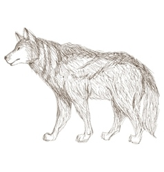 Wolf sideview sketch icon vector