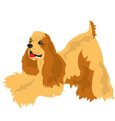 Cocker spaniel vector