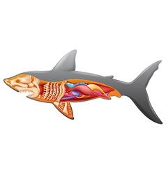 Anatomy of a shark vector