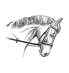 Horse portrait with bridle vector