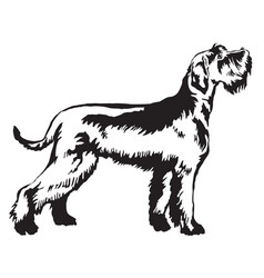 Decorative standing portrait of giant schnauzer vector