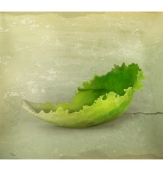 Lettuce old style vector image vector image