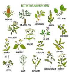 Best anti-inflammatory herbs set vector