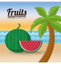 Watermelon fruit and summer concept vector