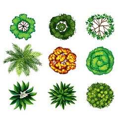 A group of plants vector