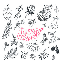 berries hand drawn doodle set isolated berry set vector image