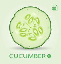 slice of fresh cucumber isolated on a background vector image vector image