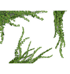Realistic ivy set vector