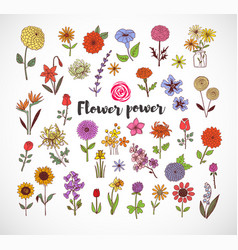 colored doodle sketch flowers on white background vector image