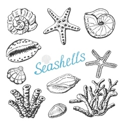 Collection of isolated sea shells coral vector