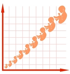Human fetus growth chart vector