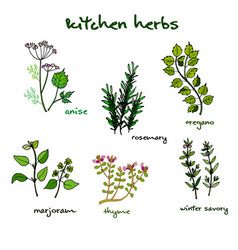 Fresh kitchen herbs vector