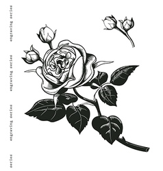 Hand sketched wintage rose in engraving style vector