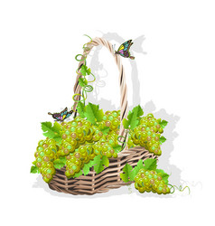 wicker basket with grapes vector image