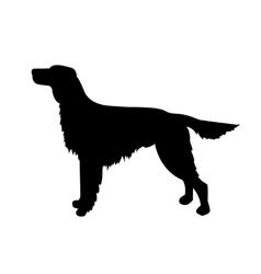 Dog silhouette irish setter vector