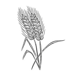 Wheat decoration vector