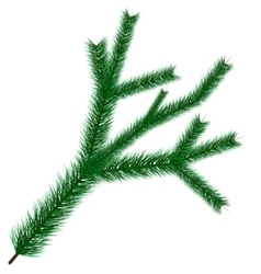 christmas tree branche vector image vector image