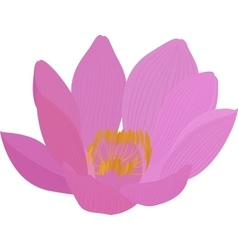 lotus pink flower icon vector image