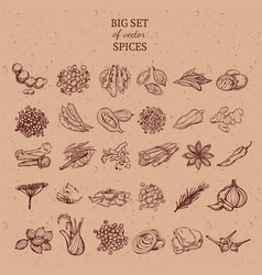 Natural spices and herbs collection vector
