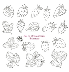 Set of strawberries and leaves vector