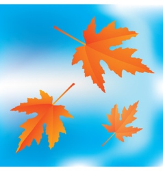 falling maple vector image