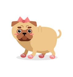 Funny pug dog character in pink bow and shoes vector