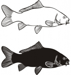 carp drawing vector image