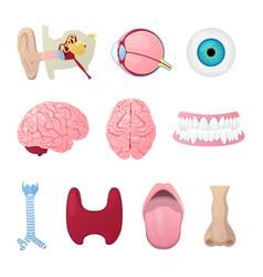 Human anatomy organs medical vector