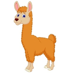 Llama cartoon vector