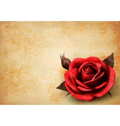 Retro background with beautiful red rose with buds vector