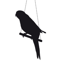 Bird silhouette isolated on white background vector