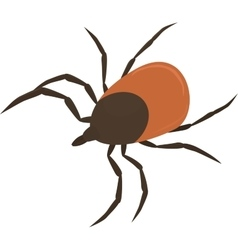 brown tick vector image