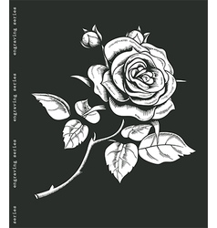 Hand sketched white rose in engraving style vector