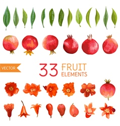 Pomegranates Flowers and Leaves Watercolor vector image vector image