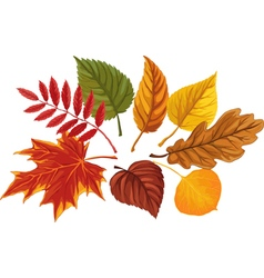 Autumn palette vector image