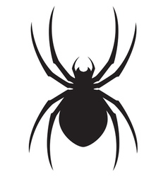 spider design vector image