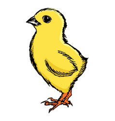 Little cute chicken vector
