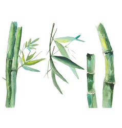 watercolor bamboo vector image