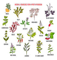 best herbal remedies for hypothyroidism vector image vector image