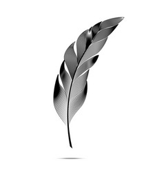 black and white large curved fluffy feather vector image vector image