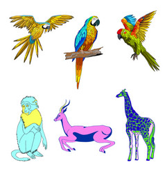 color set of animals parrots vector image vector image