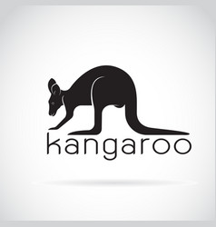 kangaroo on white background wild animals vector image vector image