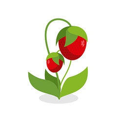Red strawberries with green stems juicy berry with vector